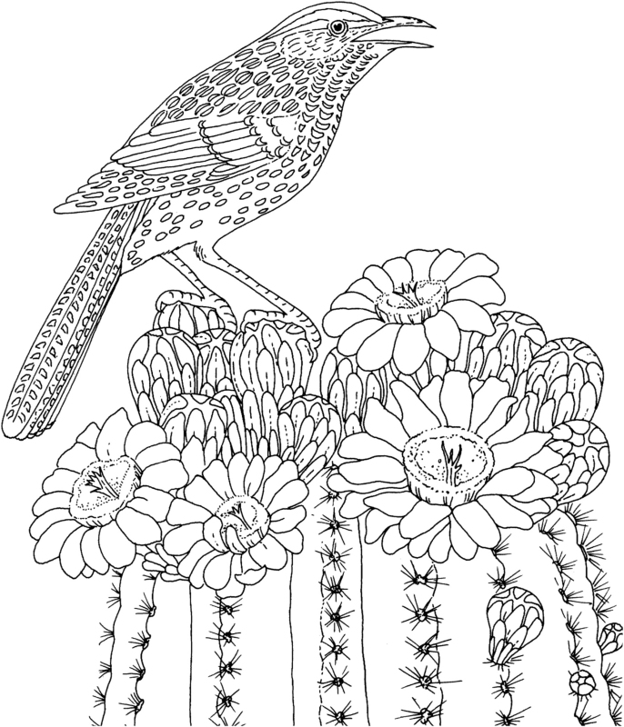 686x800 Bird Coloring Pages