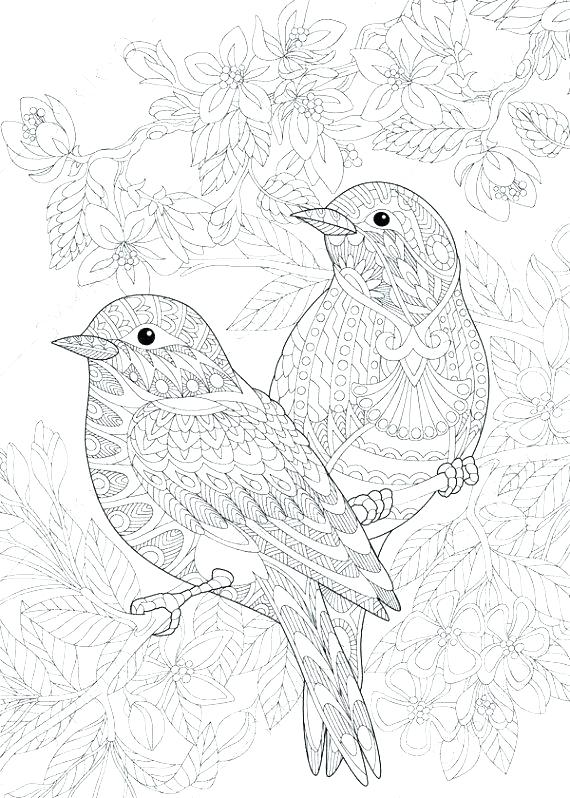 570x798 Bird Printable Coloring Pages Bird Printable Coloring Pages Print