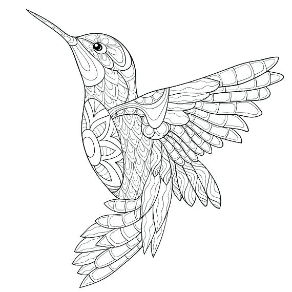570x570 Hummingbird Coloring Pages Download Adult Coloring Pages Digital