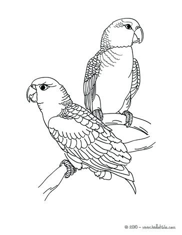 364x470 Peacock Coloring Page Parrot Picture To Color Coloring Page Animal