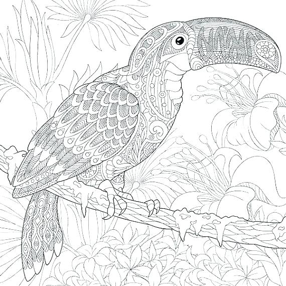 570x570 Toucan Coloring Page Bird Coloring Pages For Adults Packed