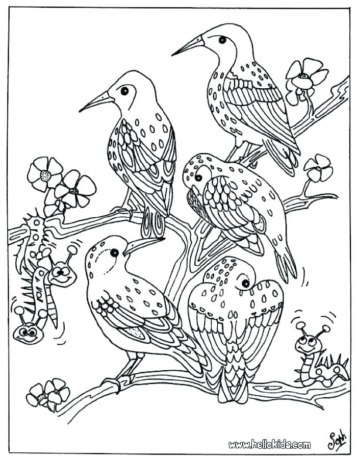 700x900 Animal Coloring Pages For Adults