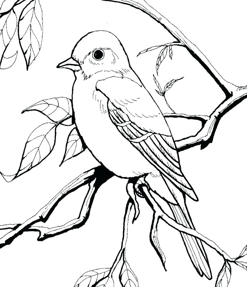 800x932 Bird Coloring Book For Adults
