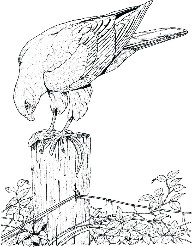 736x944 Coloring Pages For Birds