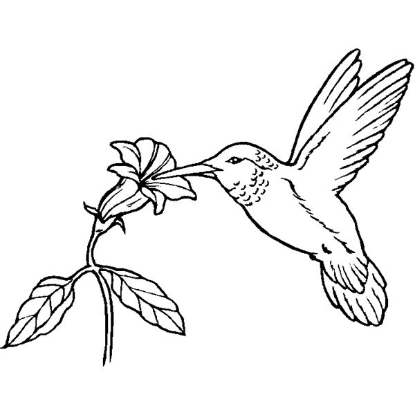 600x600 Bird Coloring Pages