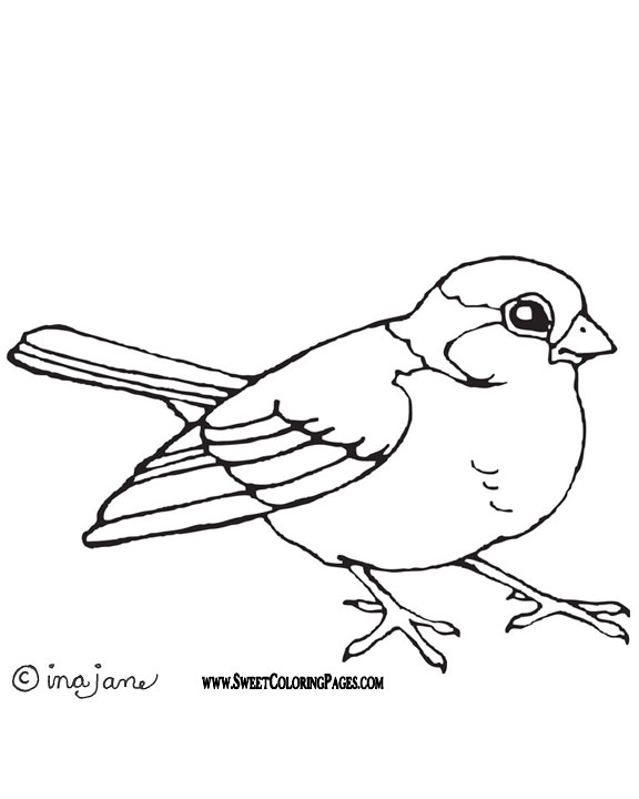 576x720 Bird Coloring Pages
