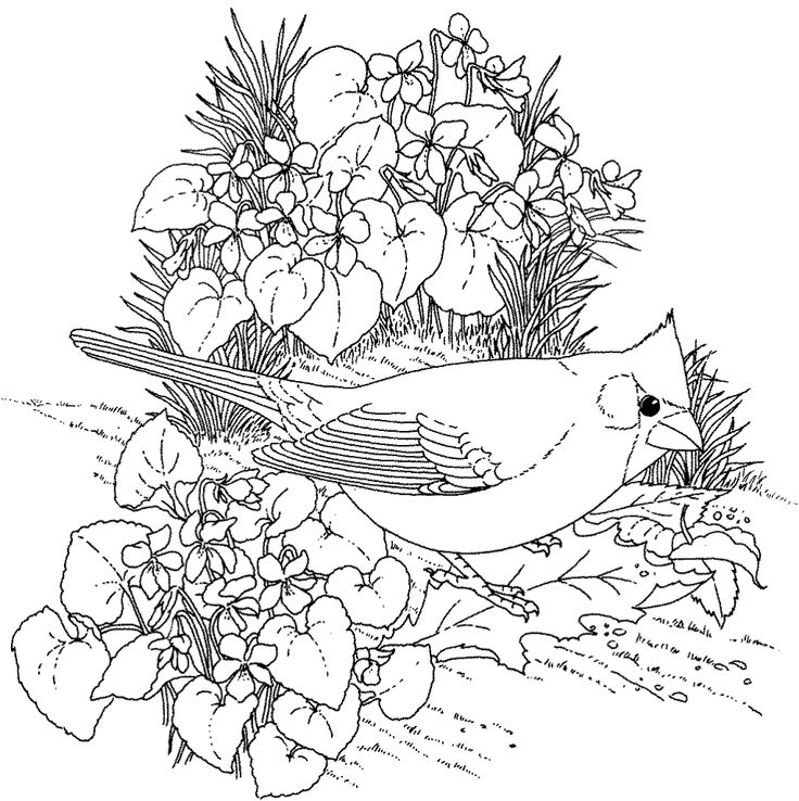 736x738 Bird Coloring Pages For Adults Free Bird Coloring Page For Adults