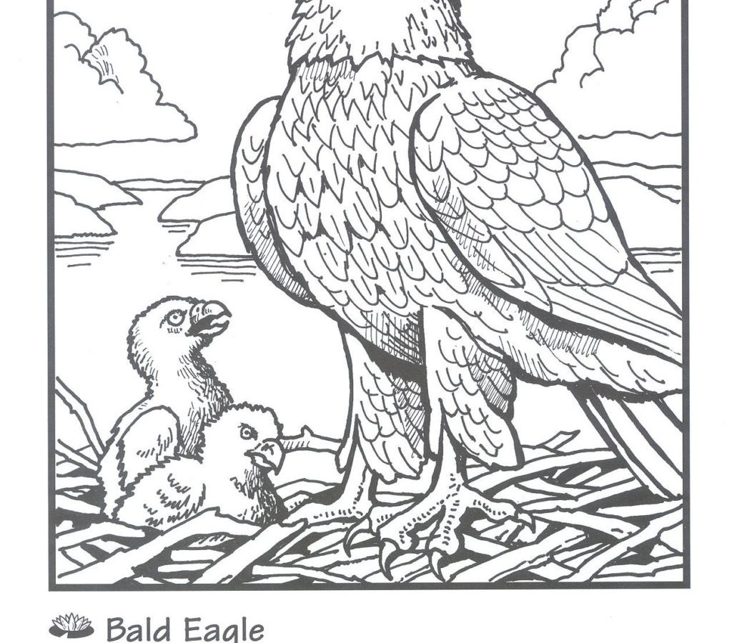 1024x900 Draw Bald Eagle Colorings With Additional Us Flag Birds Coloring