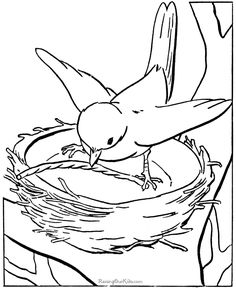 236x288 Realistic Bird Coloring Pages For Adults Enjoy Coloring