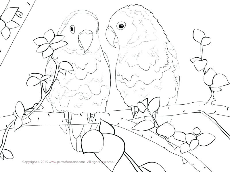 800x600 Bird Coloring Pages For Kids