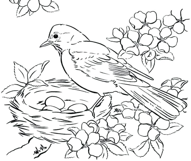 picture relating to Free Printable Bird Coloring Pages named Hen Coloring Webpages For Little ones at  Free of charge for