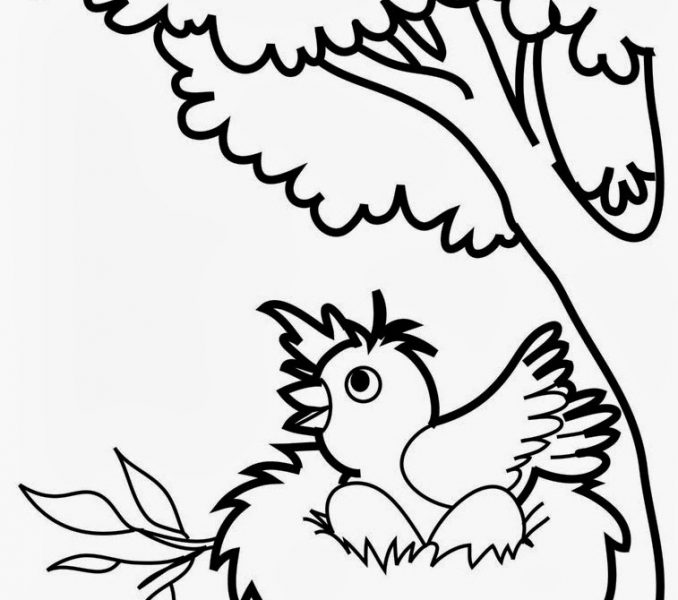 678x600 Bird Coloring Pages For Preschoolers Coloring Page