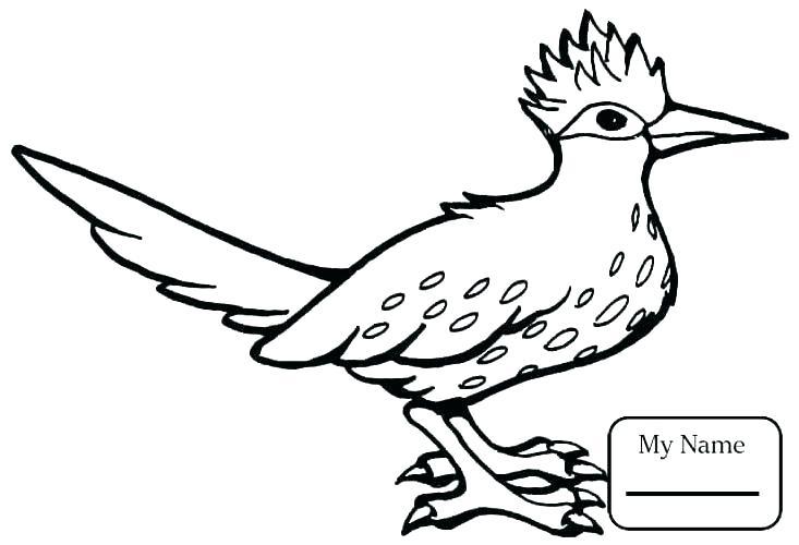 733x500 Coloring Pages Bird Cardinal Bird Coloring Page Bird Coloring