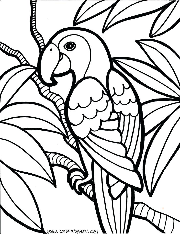 736x957 Elegant Bird Coloring Pages For Kids For Best Bird Coloring Pages
