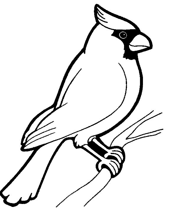 579x725 Fantastic Birds Coloring Pages For Preschool Adults Print