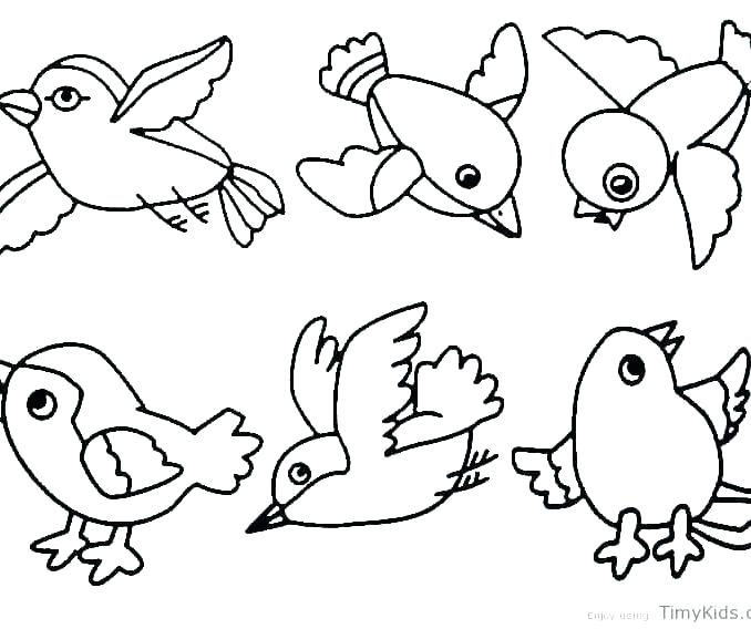 678x568 Free Coloring Pages Animals Bird Coloring Pages For Preschoolers