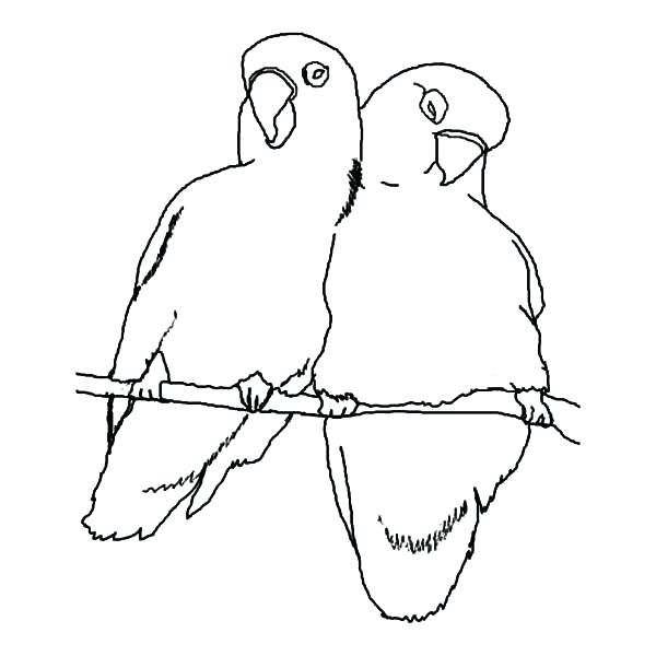 600x600 Bird Coloring Pages Bird Coloring Pages Bird Outline Drawing