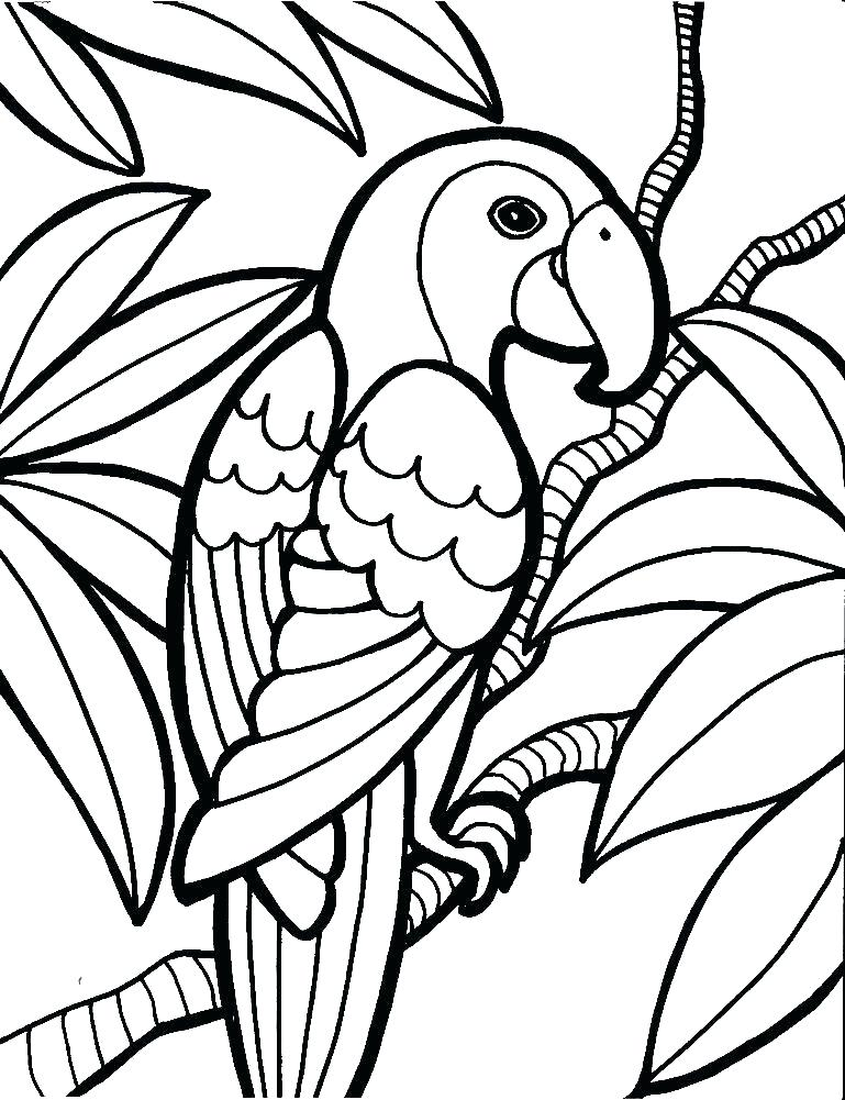 769x1001 Coconut Tree Coloring Page Coconut Tree Coloring Page Sensational