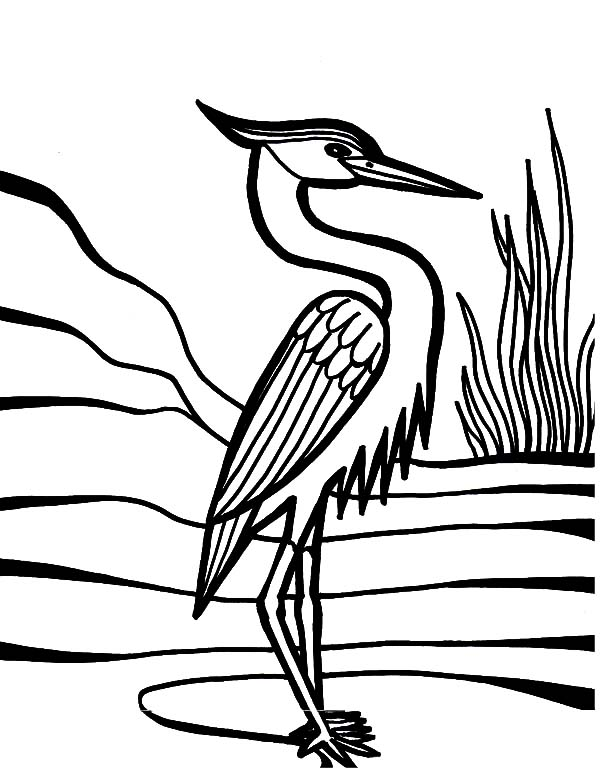 600x778 Crane Bird Beautiful Feather Coloring Pages