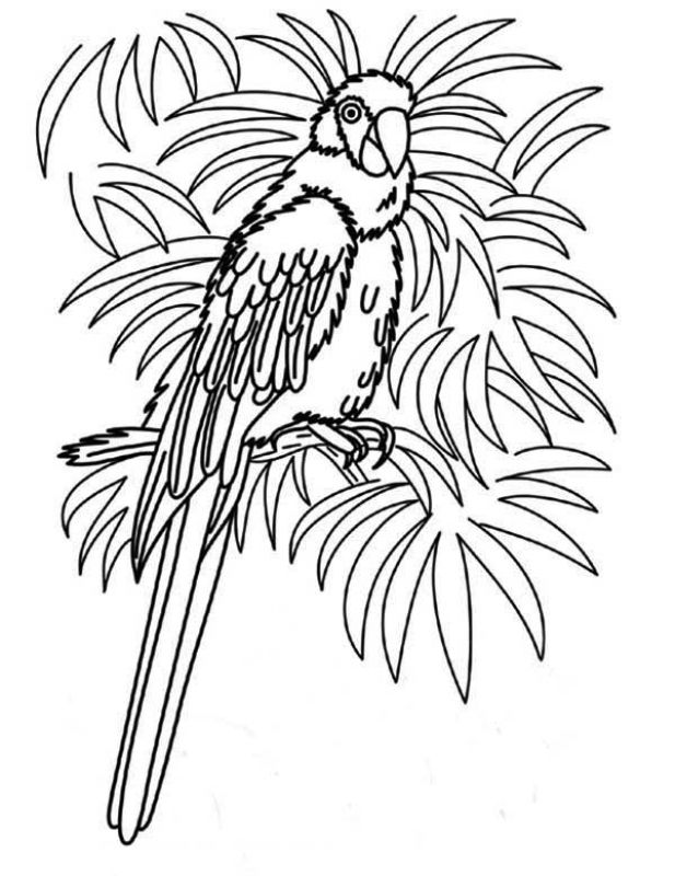 617x800 Best Animal Coloring Pages Images On Animal