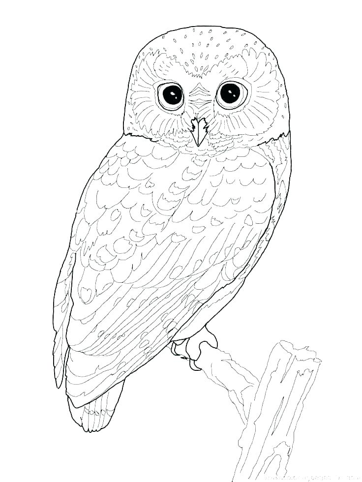 736x980 Coloring Pages Bird Coloring Pages Birds Coloring Bird Coloring