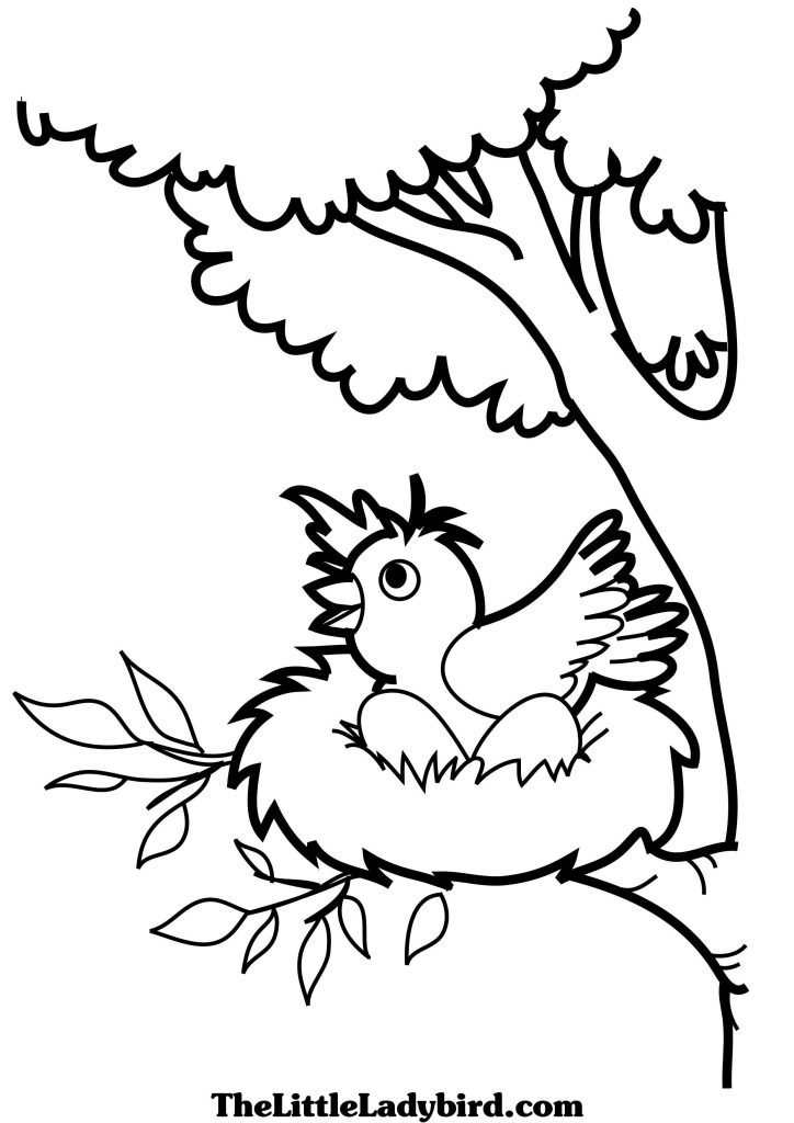 724x1024 Bird Nest Coloring Page
