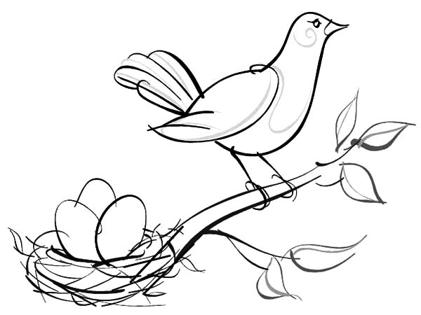 600x450 Bird Nest Coloring Page