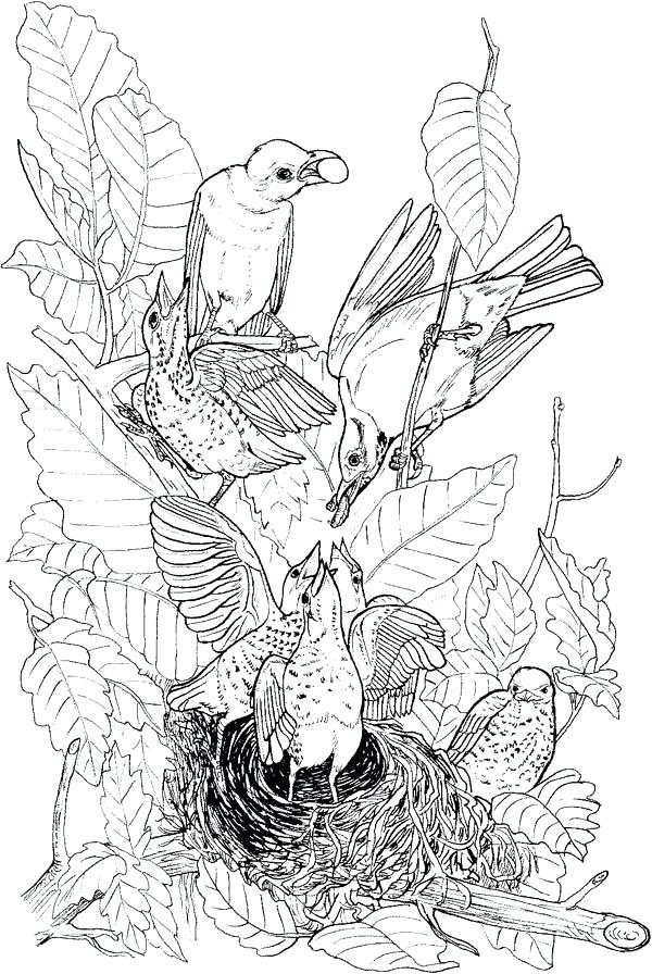 600x896 Bird Nest Coloring Page Pics Of Hummingbird Nest Coloring Pages