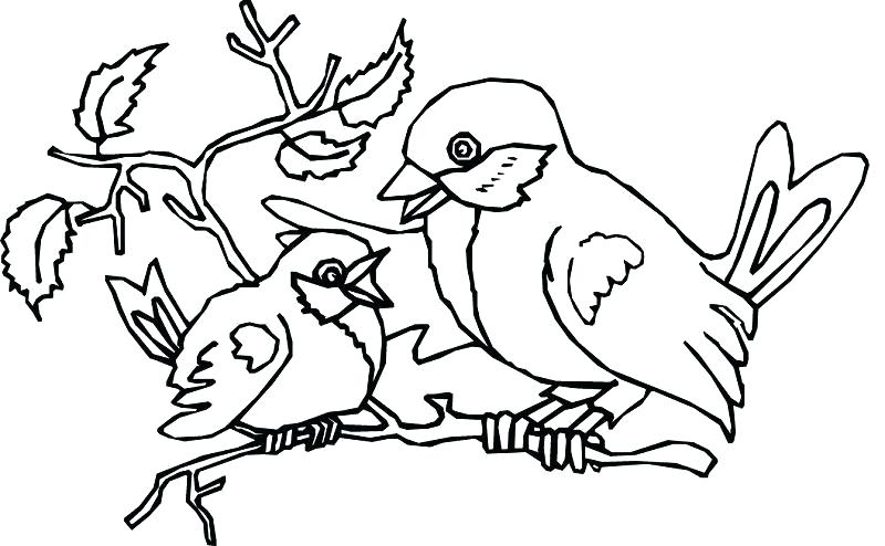 800x494 Bird Nest Coloring Page Bird Nest Coloring Page Bird Coloring