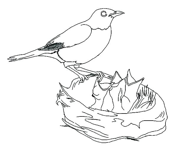 600x521 Bird Nest Coloring Page Bird Nest Coloring Page Bird Nest Coloring