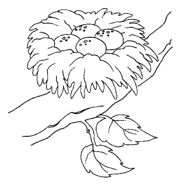 600x616 Bird Nest Coloring Page Bird Nest Coloring Page Bird Nest Safest