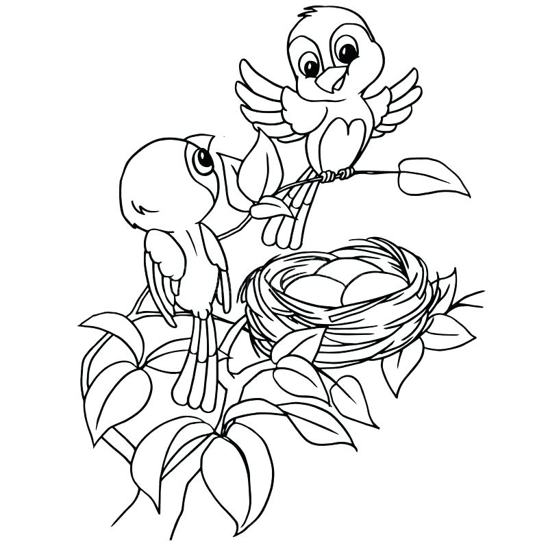 800x800 Bird Nest Coloring Page Bird Nest Printable Coloring Pages Bird