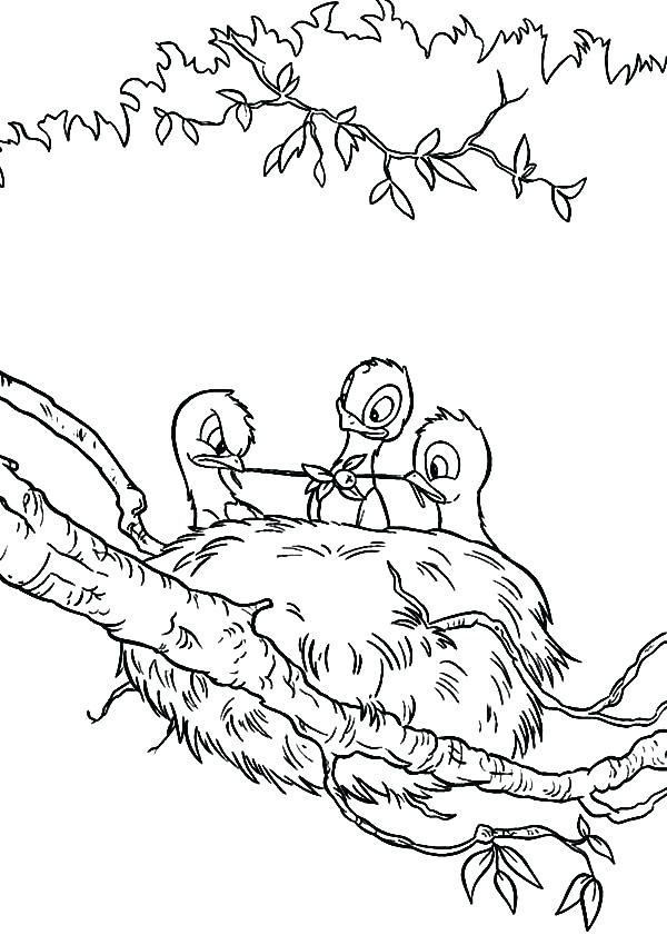 600x841 Baby Bird Coloring Page Baby Hummingbird Coloring Pages Baby Bird