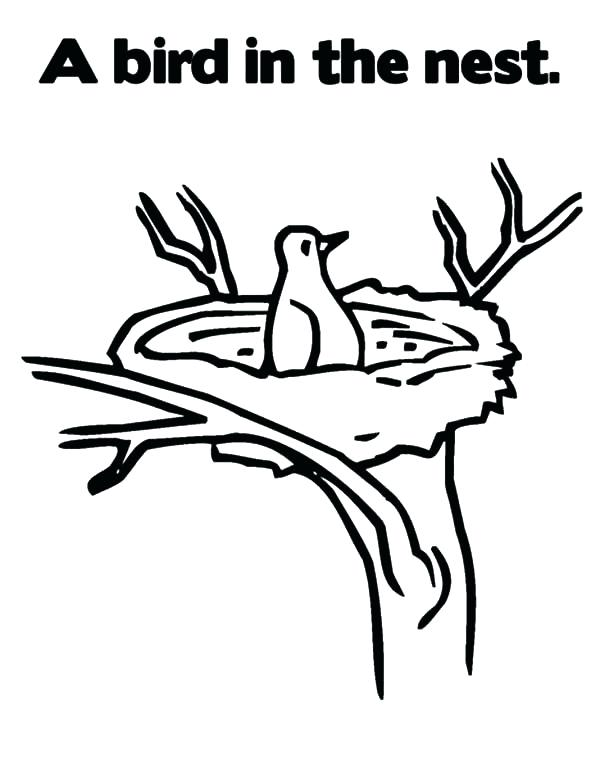 600x776 Bird Nest Coloring Page S S Bird Nest Colouring Page