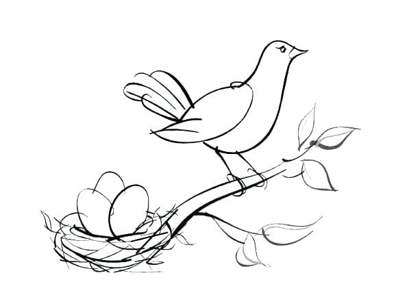 600x450 Bird Nest Eggs Coloring Page Nest Coloring