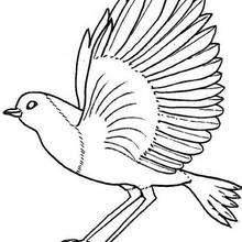 220x220 Bird Nest Coloring Pages