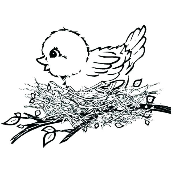 600x600 Black Canary Coloring Pages Bird Nest Coloring Page Baby Bird