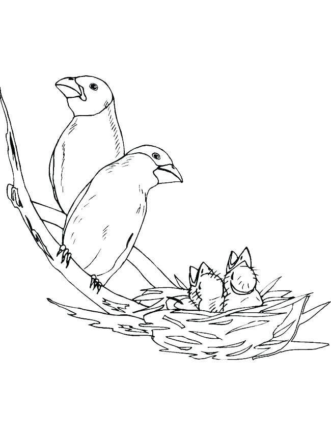 650x850 Coloring Pages Bird Bird Nest Coloring Page Cartoon Bird Coloring
