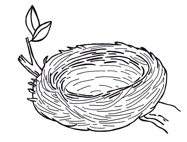 600x454 Warm And Safe Bird Nest Coloring Pages Best Place To Color