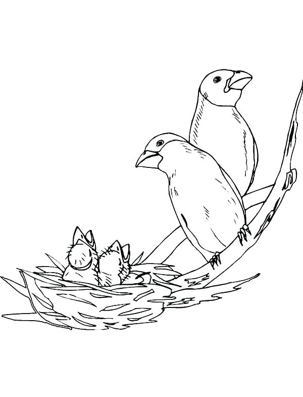 600x785 Bird Nest Coloring Page