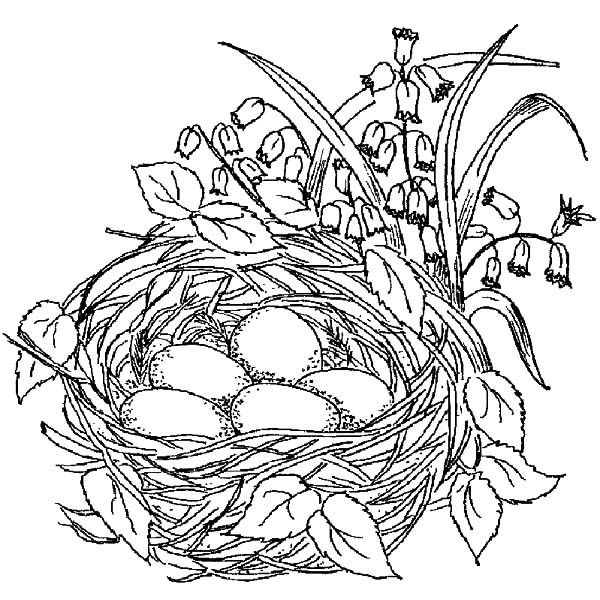 600x600 Coloring Pages Birds Beautiful Bird Nest Coloring Pages Best
