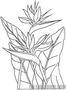 259x350 Bird Of Paradise Flower Coloring Page