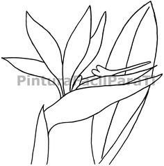 236x238 Bird Of Paradise Flower Online Coloring Page Stained Glass