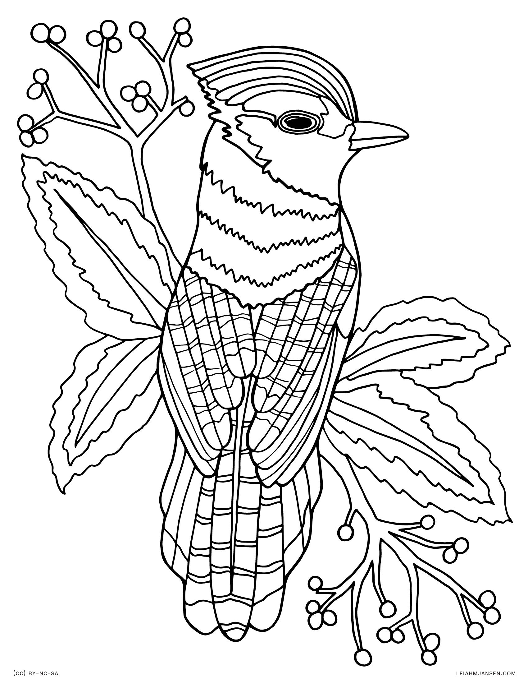 1700x2200 Bluejay Bird Realistic Blue Jay Drawing Free Printable Coloring