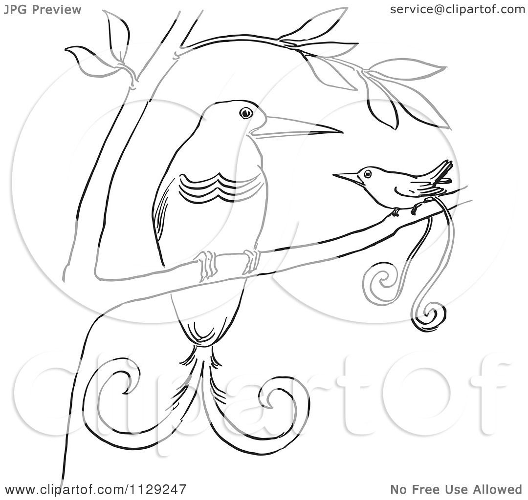 1080x1024 Cartoon Clipart Of Outlined Birds Of Paradise In A Tree