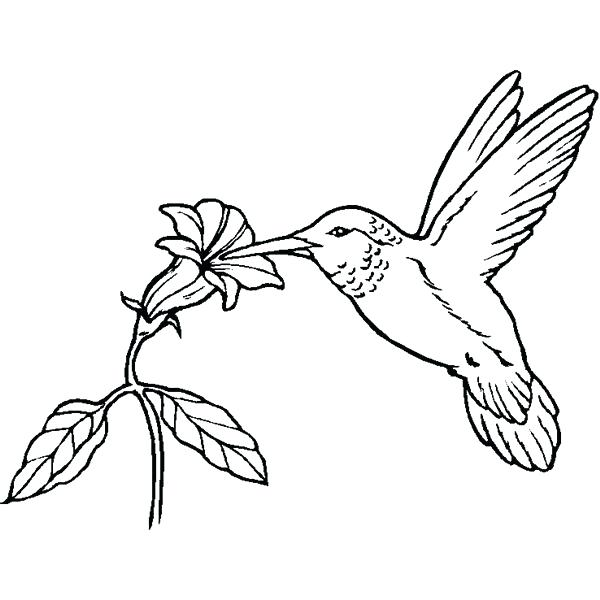 600x600 Coloring Pages Bird Of Paradise Sheets For Chapters Homeschooling