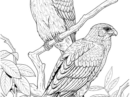 440x330 Realistic Bird Coloring Pages, Realistic Bird Of Paradise Bird
