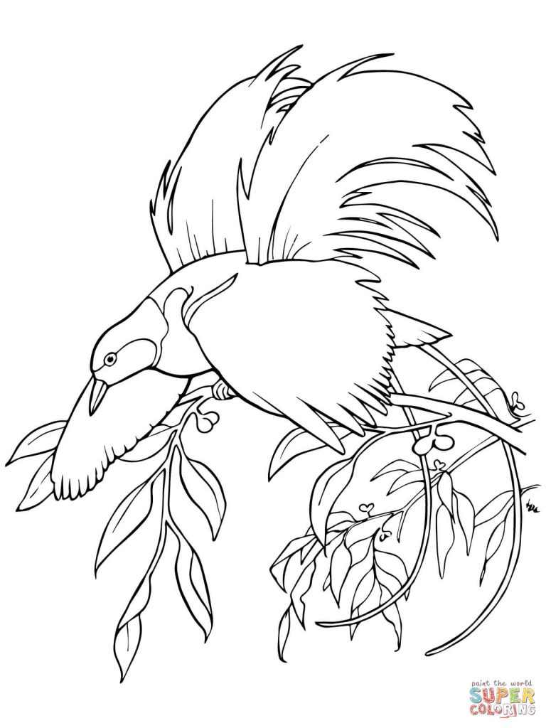 768x1024 Greater Bird Of Paradise For Coloring Page