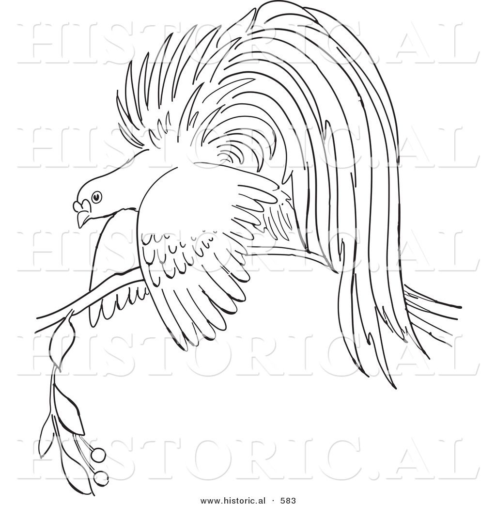 1024x1044 Obsession Bird Of Paradise Coloring Page Filmoom Me