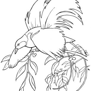 308x308 Quetzal Animal Coloring Pages Printable Birds Quetzal Animals
